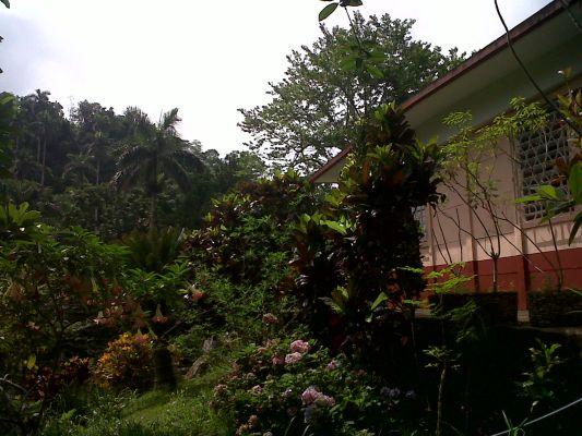Garden around