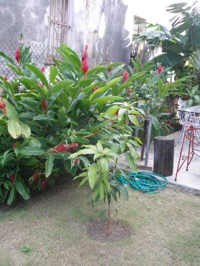 Garden in Terrace