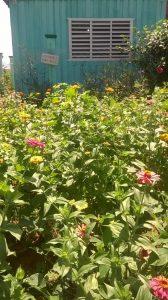 cabana-y-flores-168x300-jpg