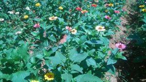 flores-de-cerca-300x168-jpg